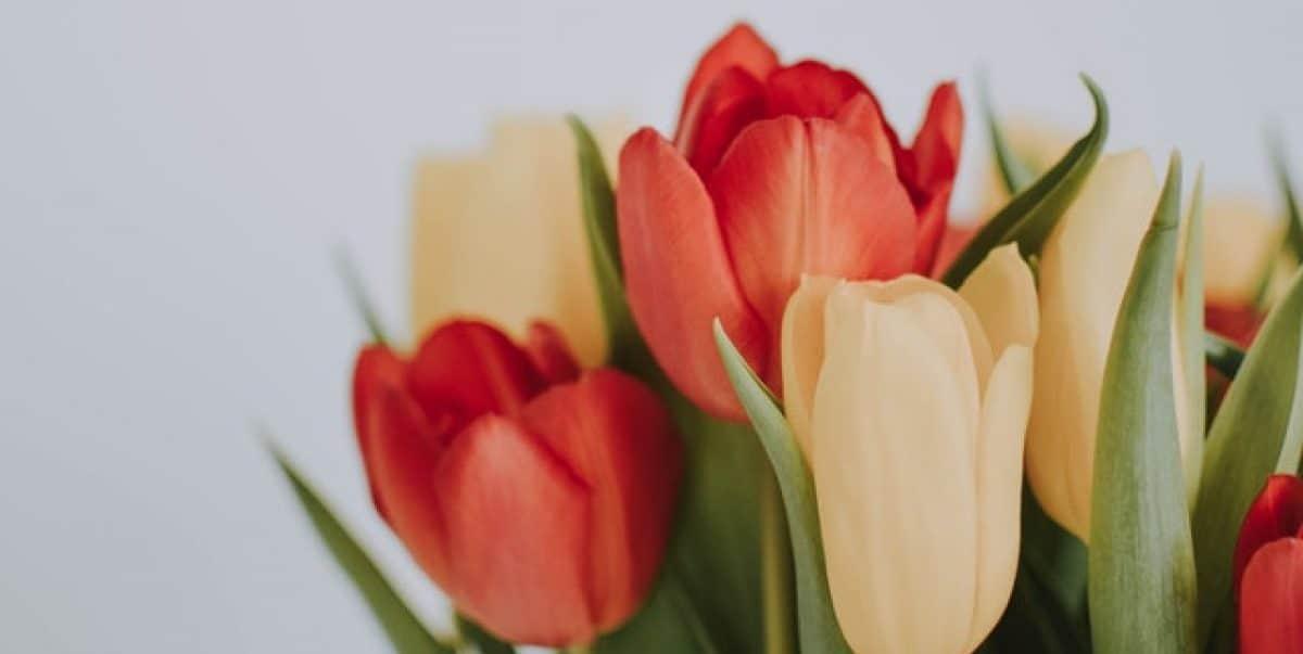 Boeket en bos bloemen bezorgen van der Voort